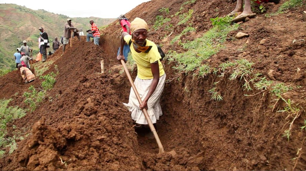 copy-of-pv-woman-digging_planting-14000-seedling